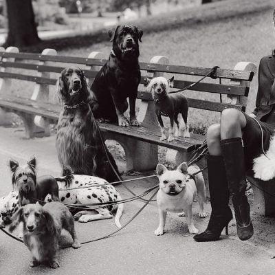 figacciona coi cani